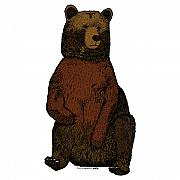 Forrest Drawings - Sitting Bear - Full Color by Karl Addison