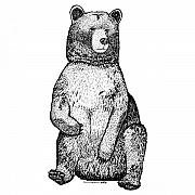 Claw Drawings - Sitting Bear by Karl Addison