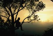 Sunrises And Sunsets Prints - Sitting In A Tree, A Hunter Uses A Kind Print by Steve Winter