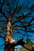 Woman In Tree Posters - Sitting In Tree 2 Poster by Scott Sawyer