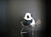Travelling Panda Prints - Sitting meditation. Floyd from Travelling Pandas series. Print by Ausra Paulauskaite