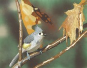 Titmouse Paintings - Sitting Pretty by William Demboski