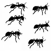 Insect Drawings Prints - Six Ants Print by Karl Addison