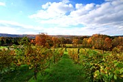Autumn Landscape Digital Art - Six Miles Creek Vineyard by Paul Ge