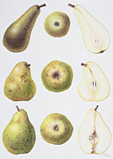 Food And Beverage Paintings - Six Pears by Margaret Ann Eden