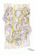 Analytic Originals - Size Exclusion Chromatography by Regina Valluzzi