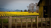 Landscape. Scenic Framed Prints - Skagit Valley Farm Framed Print by Mike Reid