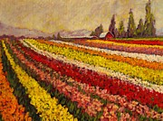 Distant Mountains Posters - Skagit Valley Tulip Field Poster by Charles Munn