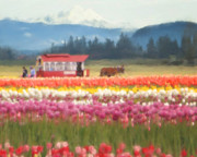 Tulips Digital Art Originals - Skagit Valley Tulip Time by Jeanette Mahoney