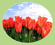 Lively Art - Skagit Valley Tulips 1 by Will Borden