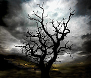 Dark Framed Prints - Skeletal Tree Framed Print by Meirion Matthias