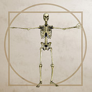 Human Bone Prints - Skeleton, Artwork Print by Friedrich Saurer