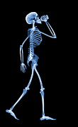 Pop Can Photos - Skeleton Drinking, X-ray by D. Roberts