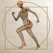 Human Bone Posters - Skeleton Running Poster by Friedrich Saurer