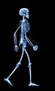 Music Ipod Photos - Skeleton With An Ipod by D. Roberts