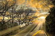 Winter Roads Photo Prints - Skeletons at Sunset Print by Debra and Dave Vanderlaan
