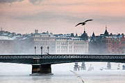 Flying Seagull Art - Skeppsholmsbron, Stockholm by Hannes Runelöf