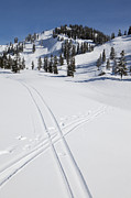 Ski Framed Prints - Ski Tracks Crossing in Fresh Snow Framed Print by Paul Edmondson