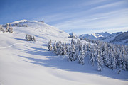 Kenai Peninsula Prints - Ski Tracks Print by Tim Grams