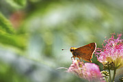 Mimosa Flowers Prints - Skipper Butterfly Dreamscape Print by Jason Politte
