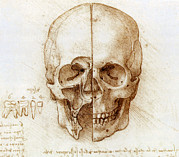 Backwards Posters - Skull Anatomy By Leonardo Da Vinci Poster by Sheila Terry