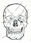 Human Skull Drawings - Skull Anatomy Illustration Mamallian Anatomy by Valerie Vanorden