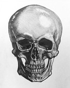 Human Skull Drawings - Skull by Mack Galixtar