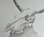 Longhorn Drawings Posters - Skull I Poster by Mary Scott