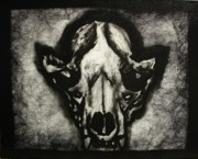 Skull Of A Racoon Print by Michael Kulick