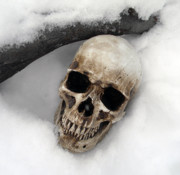 Sabrina Zbasnik - Skull on Snow
