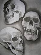 Human Skeleton Drawings - Skull Study by Candace Barnett