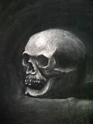 Human Skull Drawings - Skull Study by Stephanie Louden