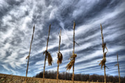 Corn Stalks Art - Skyward Corn by Emily Stauring