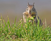 Southern California Photo Originals - Slack-jawed squirrel by Matt MacMillan