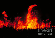 Slash Photo Metal Prints - Slash And Burn Agriculture Metal Print by Dante Fenolio
