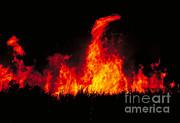 Slash And Burn Agriculture Print by Dante Fenolio
