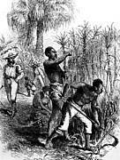 Black History Art - Slaves Harvesting Sugar Cane by Everett