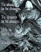 DazzleMe Photography - Sleep On