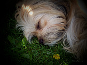 Puppy Digital Art Prints - Sleeping Beauty Print by Robert Orinski