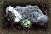 Sleeping Easter Bunny Print by Danuta Bennett