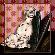 Dalmatian Dog Prints - Sleeping III Print by Nik Helbig
