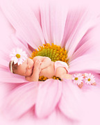 Photography By Mimi Prints - Sleeping Miracles Print by MiMi  Photography