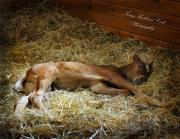 Dressage Photos - Sleeping Newborn by Terry Kirkland Cook