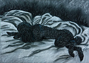 Dog Paw Paintings - Sleeping Poodle by Terri Mills
