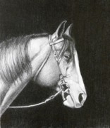 Horseman Drawings - Sleepy by David Ackerson