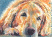 Sleeping Dog Drawings Prints - Sleepy Dog Print by Melissa J Szymanski