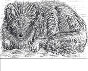 Arctic Drawings Prints - Sleepy Fox Print by John A Fowler