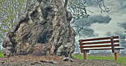 Park Benches Photo Originals - Sleepy Hallow Awakens by Jeramie Curtice