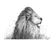 Lion Drawings - Sleepy Lion by Josh Rowland