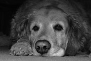 Best Friend Photos - Sleepy by Todd Hostetter